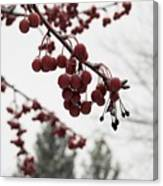 Cold Crabapples Canvas Print