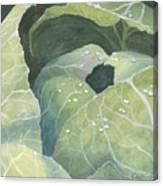 Cold Crop Canvas Print