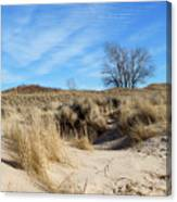 Cold Dune Day Canvas Print