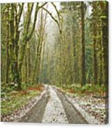 Cold Paths Canvas Print