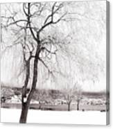 Coldness Canvas Print