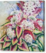 Coleus And Queen Anne Canvas Print