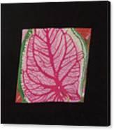 Coleus Canvas Print