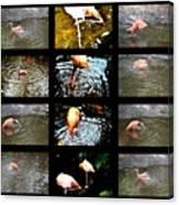 Birds' Collage-3 Canvas Print