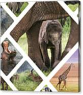 Collage Of Animals From Tanzania Canvas Print