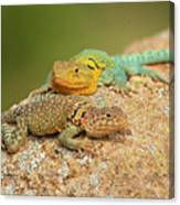 Collared Lizards Canvas Print