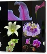 Collection Of Flowers Over Black  Canvas Print