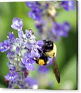 Collection Of Pollen Canvas Print