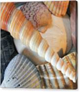Collection Of Shells Canvas Print