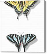 Collection Of Two Butterflies Canvas Print