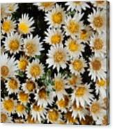 Collective Flowers Canvas Print