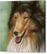 Collie Canvas Print