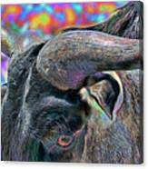 Color In My Eyes Canvas Print