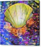 Color In Shell Canvas Print