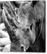 Color Me Rhino Canvas Print