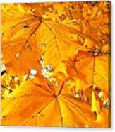 Color Of The Leaves Canvas Print