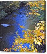 Color On Big Cataloochee Creek Canvas Print