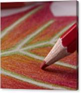 Color Pencil Drawing Canvas Print
