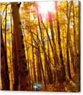 Colorado Aspen Gold 3 Canvas Print