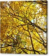 Colorado Aspens In Fall Canvas Print