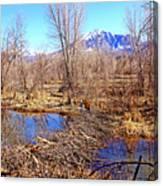 Colorado Beaver Ecosystem Canvas Print