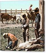 Colorado: Branding Calves Canvas Print