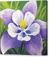 Colorado Columbine Canvas Print