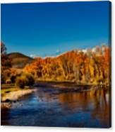 Colorado Cottonwoods In Autumn Canvas Print