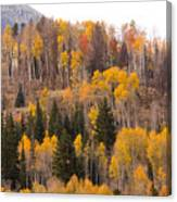 Colorado Fall Foliage Canvas Print