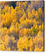 Colorado High Country Autumn Colors Canvas Print