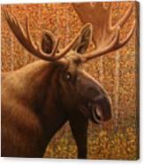 Colorado Moose Canvas Print