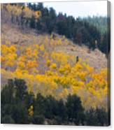 Colorado Mountain Aspen Autumn View Canvas Print