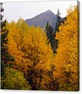 Colorado Road Canvas Print