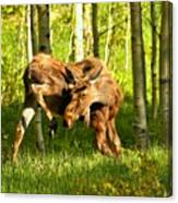 Colorado Rockies Moose Canvas Print