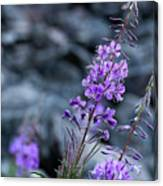Colorado Wildflower Canvas Print