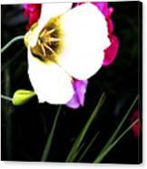 Colorado Wildflower1 Canvas Print