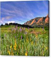 Colorado Wildflowers Canvas Print