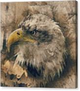 Colored Etching Of American Bald Eagle Canvas Print