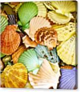Colored Shells Canvas Print