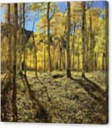 Colorful Aspens Canvas Print