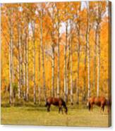 Colorful Autumn High Country Landscape Canvas Print