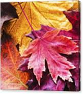Colorful Autumn Leaves Closeup Canvas Print