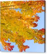 Colorful Autumn Reaching Out Canvas Print