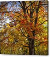 Colorful Autumn Tree In Southwest Michigan By Gun Lake Canvas Print