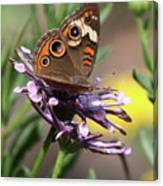 Colorful Butterfly On Daisy Canvas Print