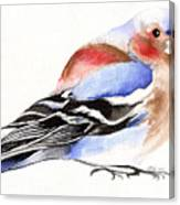 Colorful Chaffinch Canvas Print