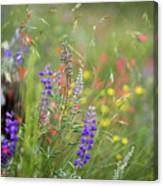 Colorful Colorado #2 Canvas Print
