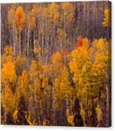 Colorful Colorado Autumn Landscape Vertical Image Canvas Print