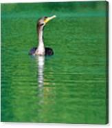 Colorful Cormorant Canvas Print