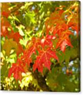Colorful Fall Leaves Red Nature Landscape Baslee Troutman Canvas Print